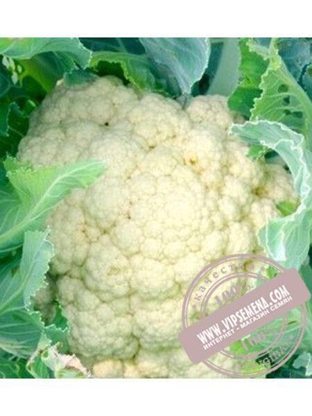 АБЕНИ F1 (ABENI F1) семена цветной капусты Seminis, оригинальная упаковка (1000 семян)