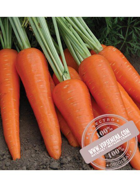 Абликсо F1 (Ablixo F1) семена моркови типа Шантане Seminis, оригинальная упаковка (1 млн. семян)