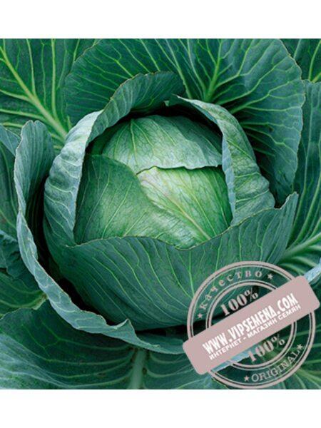 Аммон F1 (Ammon) семена капусты белокочанной Seminis, оригинальная упаковка (2500 семян)