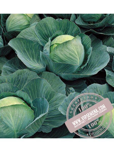 Атриа F1 (Atria F1) семена капусты белокочанной Seminis, оригинальная упаковка (2500 семян)