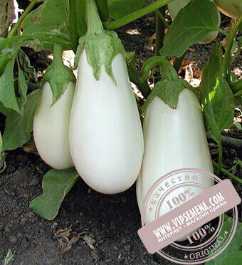 Бибо F1 (Bibo) семена баклажана Seminis, оригинальная упаковка (1000 семян)