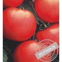 Дебют F1 (Debut) семена томата Seminis, оригинальная упаковка (1000 семян)