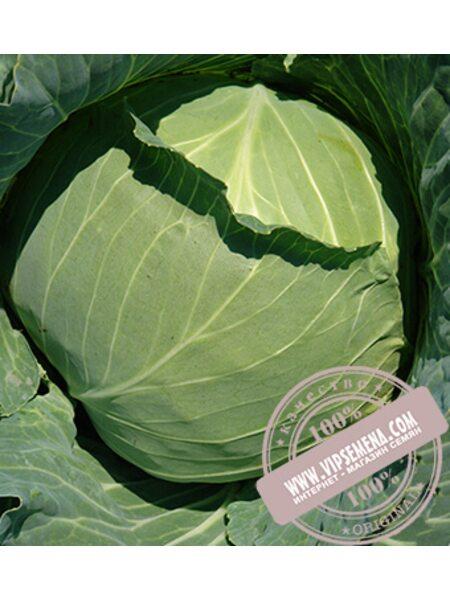 Дидон F1 (Didone) семена капусты белокочанной Seminis, оригинальная упаковка (2500 семян)