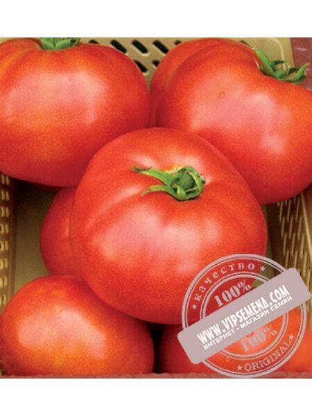 Элегро F1 (Elegro) семена томата Seminis, оригинальная упаковка (1000 семян) АКЦИЯ!!!