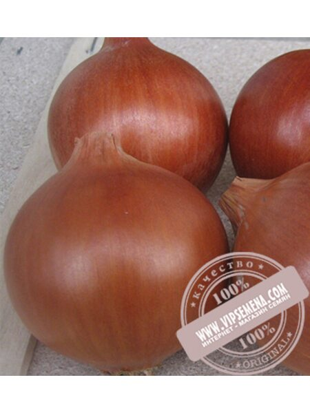 Эленка F1 (Elenka F1) семена лука желтого Cora Seed, оригинальная упаковка (250000 семян)
