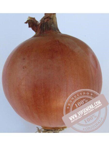 Фундадор F1 (Fundador f1) семена лука желтого Cora Seed, оригинальная упаковка (250000 семян)