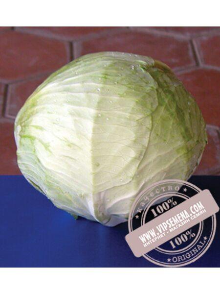 Фундакси F1 (Fundaxy) семена капусты белокочанной Seminis, оригинальная упаковка (2500 семян)