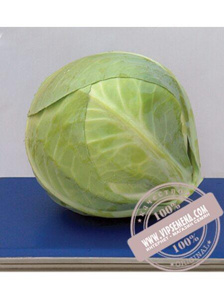 Фуриос F1 (Furios) семена капусты белокочанной Seminis, оригинальная упаковка (2500 семян)