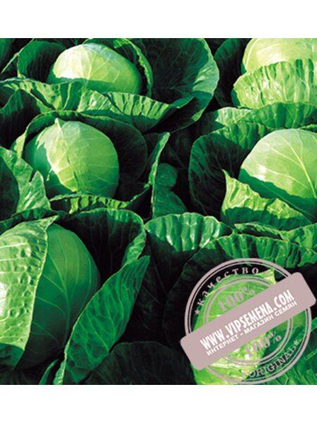 Гермес F1 (Hermes) семена капусты белокочанной Seminis, оригинальная упаковка (2500 семян)