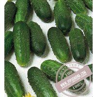 Маринда F1 (Marinda F1)  семена огурца-корнишона партенокарпического Seminis, оригинальная упаковка (1000 семян)