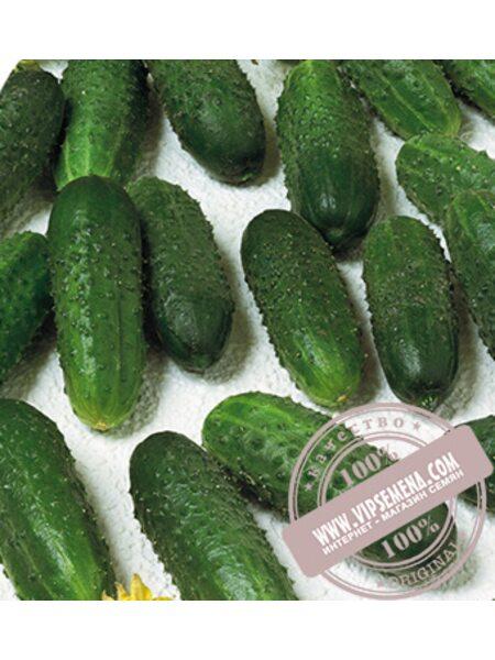 Marinda F1 (Маринда) семена огурца-корнишона партенокарпического Seminis, оригинальная упаковка (1000 семян)