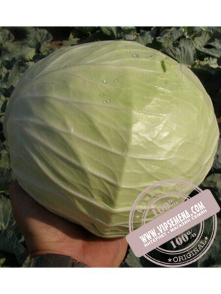 Мензания F1 (Menzania) семена капусты белокочанной Seminis, оригинальная упаковка (2500 семян)