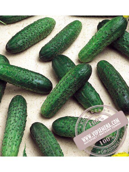Mirabelle F1 (Мирабелл) семена огурца-корнишона партенокарпического Seminis, оригинальная упаковка (1000 семян)