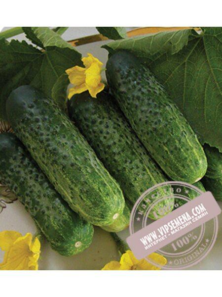Надежда F1 (Nadeshda Mix) семена огурца-корнишона пчелоопыляемого Seminis, оригинальная упаковка (1000 семян)
