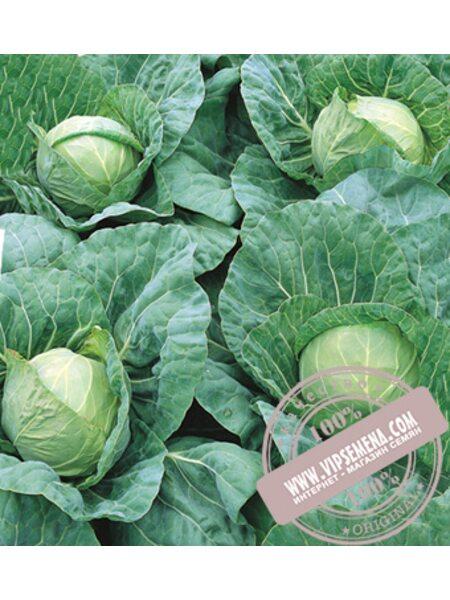 Пандион F1 (Pandion) семена капусты белокочанной Seminis, оригинальная упаковка (2500 семян)