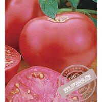 Пинк Леди F1 (Pink Girl) семена томата Seminis, оригинальная упаковка (500 семян) АКЦИЯ!!!
