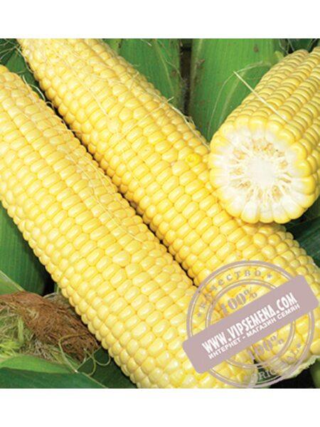 Сигнет F1 (Signet) семена сахарной кукурузы Seminis, оригинальная упаковка (5000 семян)