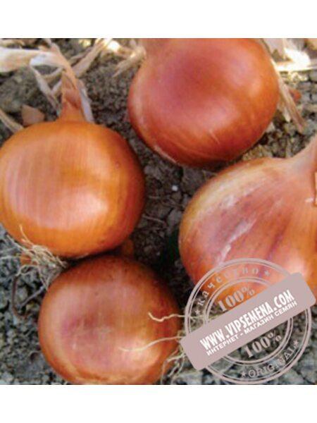 Соня F1/Sonia (Khalifer) F1 семена лука желтого Cora Seed, оригинальная упаковка (250000 семян)