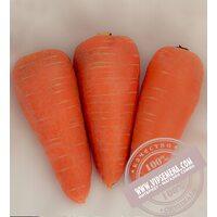 СВ 3118 ДХ F1 ǿ 2.0 и более (SV 3118 DH) семена моркови типа Шантане Seminis, оригинальная упаковка (1 млн. семян)