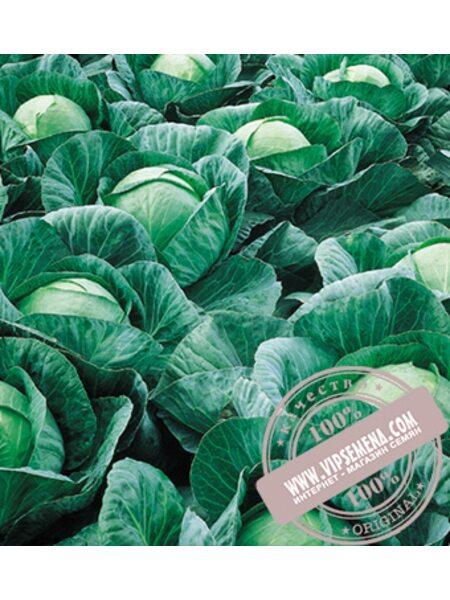 Вестри F1 (Vestri) семена капусты белокочанной Seminis, оригинальная упаковка (2500 семян)