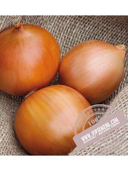 Замбези F1 (Zambezi) семена лука репчатого Seminis, оригинальная упаковка (250000 семян)