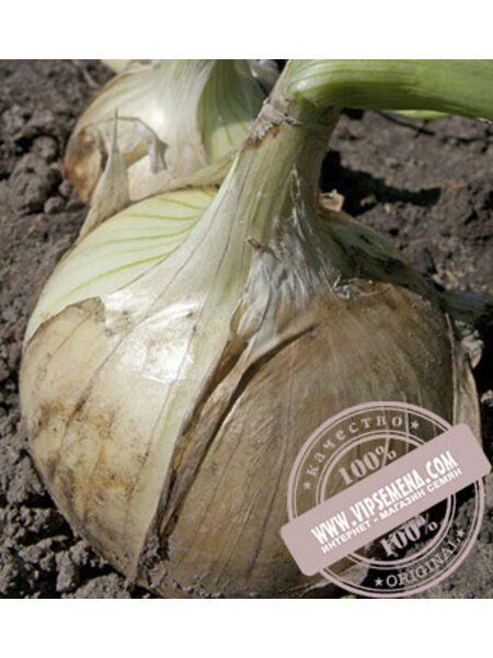 Вердон F1T-803 (Verdon F1 T-803) семена лука репчатого Takii Seeds, оригинальная упаковка (250000)